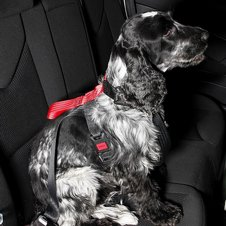 Artfex Dog Harness Bilsele Large 4 thumbnail