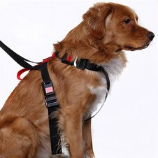 Artfex Dog Harness Bilsele Medium